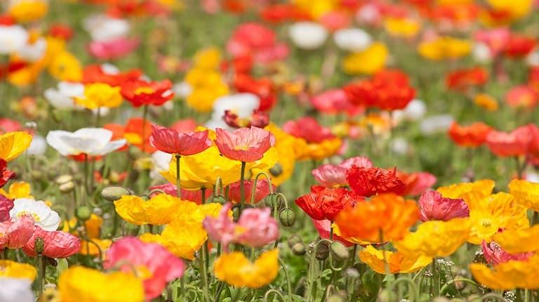 季節の花の祭りまとめ