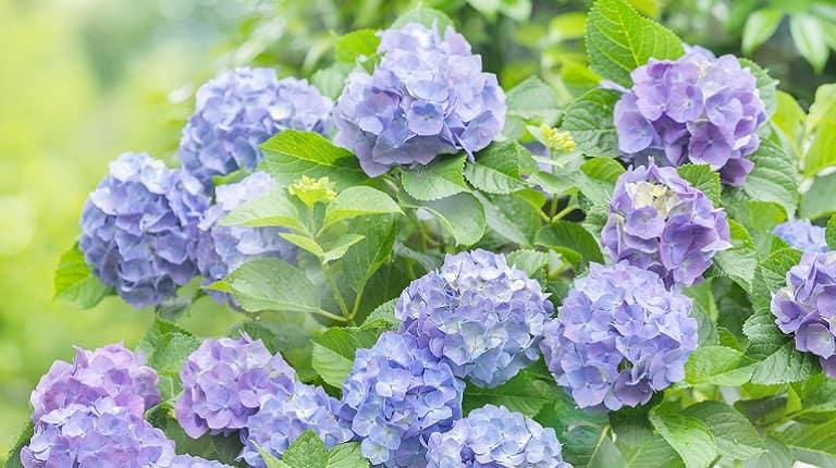 6月の季節の花のイベント