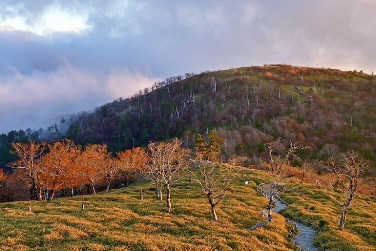 大台ケ原山は登山初心者でも楽しめる!おすすめコースや周辺情報もご紹介